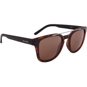 Alpina Sylon Glasses black-havana matt